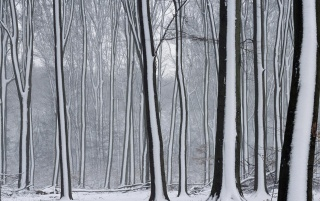 Snow covered forest wallpapers and stock photos