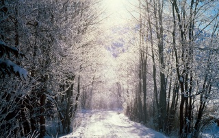 Snowy woods wallpapers and stock photos