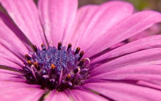 Pink flower wallpapers and stock photos