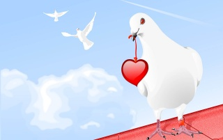 Random: White dove and heart