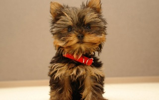 Cute puppy wallpapers and stock photos