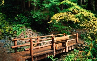 Sol Duc Falls Trail wallpapers and stock photos