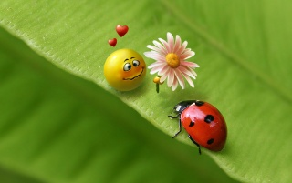 Ladybug love wallpapers and stock photos