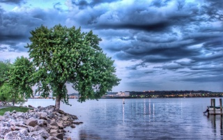 Tree and lake wallpapers and stock photos