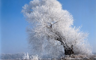 Random: Beautiful white tree
