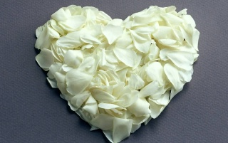 White petals heart wallpapers and stock photos