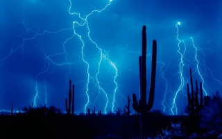 Lightning and cactus wallpapers and stock photos