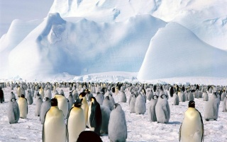 Random: Lots of penguins