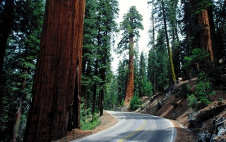 Redwood Road wallpapers and stock photos