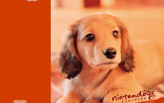 Ninten orange dog wallpapers and stock photos