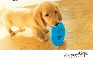 Ninten dog blue wallpapers and stock photos