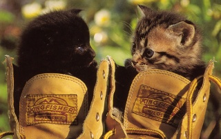 Cats in the shoes wallpapers and stock photos