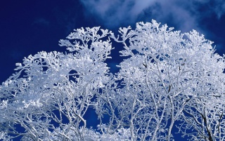 Invierno ramas heladas wallpapers and stock photos