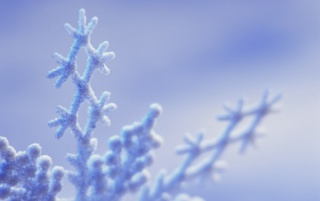 Frost winter forms wallpapers and stock photos