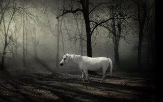 Unicorn in the forest wallpapers and stock photos