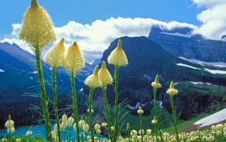 Glacier National Park wallpapers and stock photos