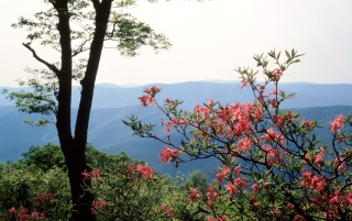 Blue Ridge wallpapers and stock photos
