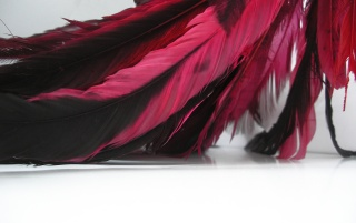 Random: Red feathers