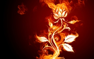 Fire flower wallpapers and stock photos