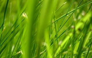 Green grass 1 wallpapers and stock photos