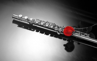 Instrument and rose wallpapers and stock photos