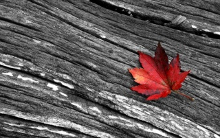 Previous: A red leaf