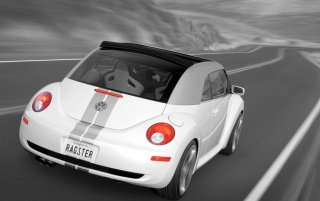 White Beetle wallpapers and stock photos
