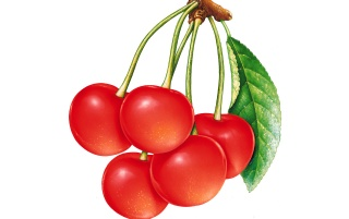 Red cherries wallpapers and stock photos