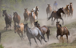 Running horses wallpapers and stock photos