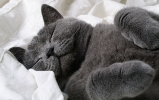 Sleeping cat wallpapers and stock photos