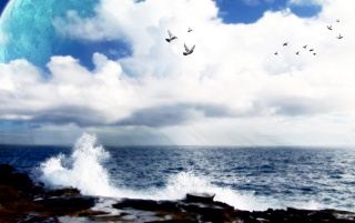 Birds and waves wallpapers and stock photos