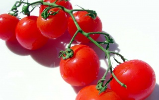 Red tomatoes wallpapers and stock photos