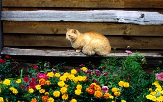Random: Cat and flowers