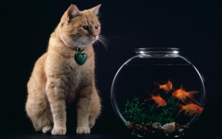 Cat and fish bowl wallpapers and stock photos