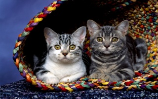 Cats in basket wallpapers and stock photos