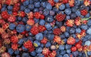 Previous: Wild berries