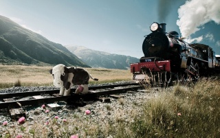 Tren y la vaca wallpapers and stock photos