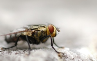 Fly up close wallpapers and stock photos
