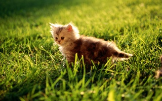 Random: Kitten in the grass