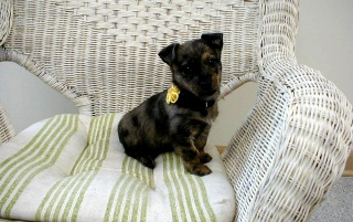 Dog on chair wallpapers and stock photos