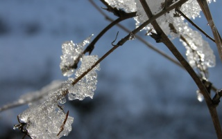 Ice on branch wallpapers and stock photos