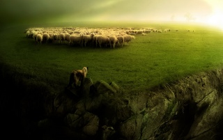 Sheep and wolf wallpapers and stock photos