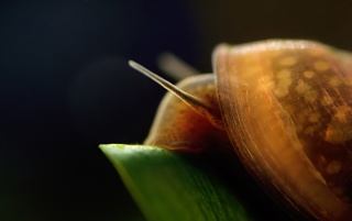 Snail on black wallpapers and stock photos