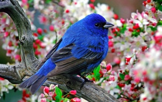 Colorful little bird wallpapers and stock photos