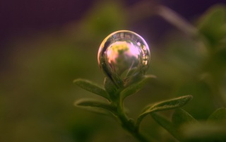 Random: Bubble on plant