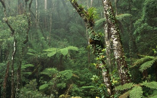Montane Rainforest wallpapers and stock photos
