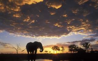Elephant silhouetted wallpapers and stock photos