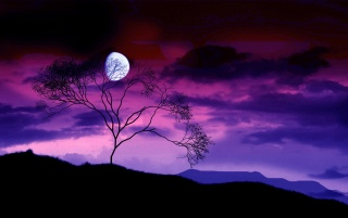 Moon behind tree wallpapers and stock photos