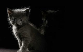 Next: Kittens in the dark