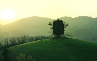 Trees on hill top wallpapers and stock photos